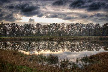 Reflectie van bomen van Cor Woudstra
