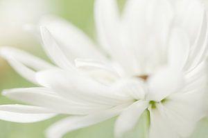 Dancing petals