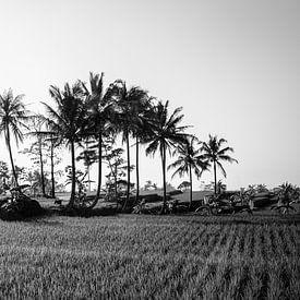 Zwart wit panorama van een rijstveld op Bali van Ellis Peeters
