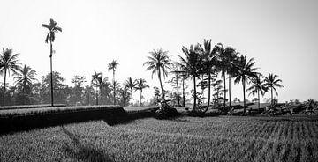 Schwarz-Weiss-Panorama eines Reisfeldes in Bali von Ellis Peeters