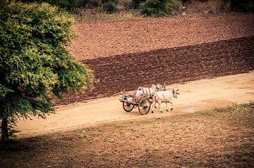Bagan's boeren velden in Myanmar van Sven Wildschut