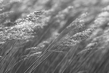 wellenförmige Schilfhalme in Schwarz-Weiß von Laura Weijzig
