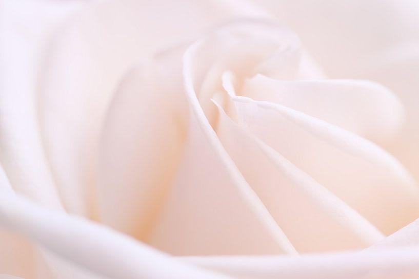 Gorgeous Pink.... van LHJB Photography