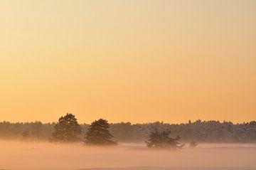 Winter zonsondergang von