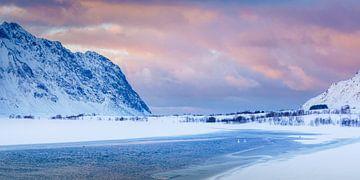 Zwanen in een schemerlandschap op Lofoten von Nando Harmsen