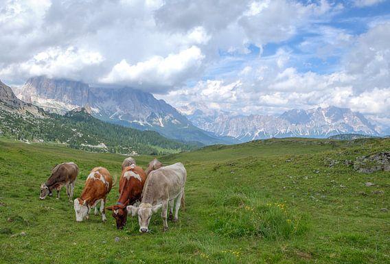 Koeien in de Dolomieten Italie van Rens Marskamp