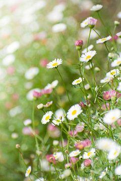 Wiese mit Gänseblümchen vertikales Foto von Dorota Talady