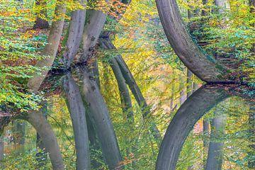 Herfst boomstammen reflecteren in beek van bos   van Ben Schonewille
