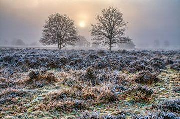 Frost auf dem Boden von Peter Zendman