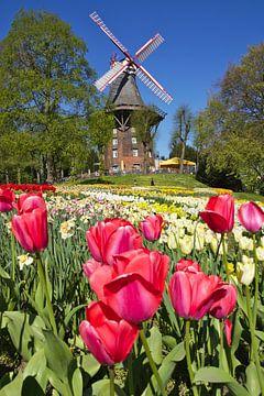 Blumen und Windmühle von Hannon Queiroz