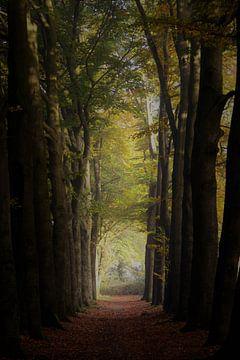 Avenue des Oaks von Marieke Peters-Brugmans