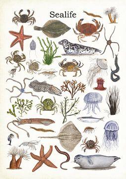 Sealife (leven in zee) van Jasper de Ruiter