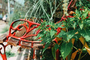 Rood bankje bloemen van Lisanne Koopmans