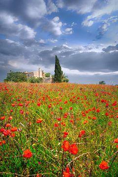 Mohnblumen Feld mit Finca auf Mallorca im Sommer von Fine Art Fotografie
