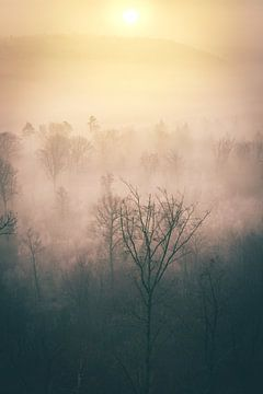 Zonsopgang in winterbos met mist van bovenaf van Jan Wehnert