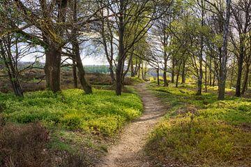 Spaziergang im Frühling von Tim Abeln