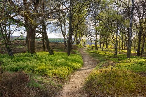 Wandeling in de lente van Tim Abeln