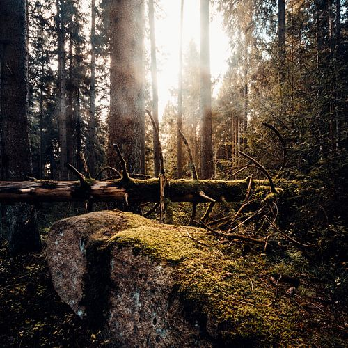 Herbstwald 003 van Oliver Henze