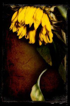 Drawn By Nature (Sonnenblume #003) von Peter Baak
