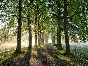 Sonniger Morgen im Wald von Peet Romijn