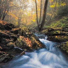 Herfst aan de rivier van Peter Poppe
