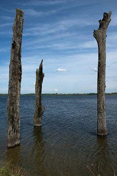 Baumen im Wasser von Guus Quaedvlieg