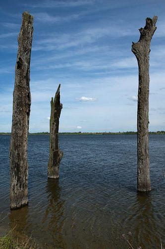 Watersculpturen, Bomen in het water van