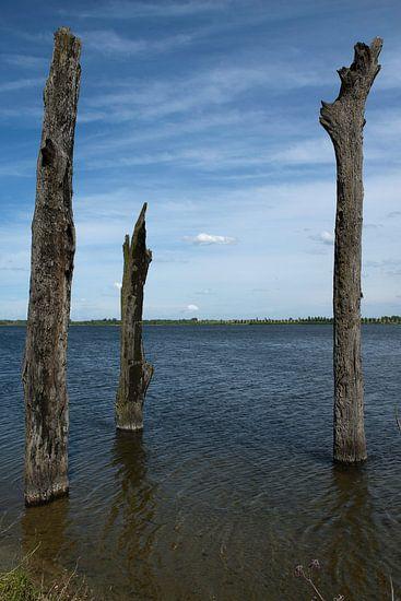 Watersculpturen, Bomen in het water van Guus Quaedvlieg
