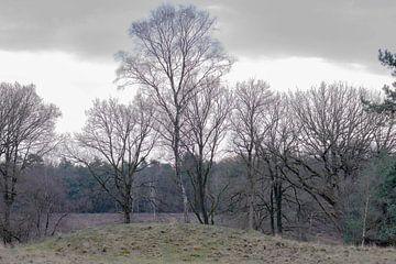 drie bomen op een heuvel van Tania Perneel