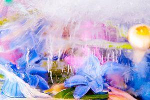 Bloemen en planten gefotografeerd in ijs.