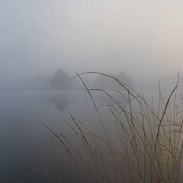 Brouillard dans le Drents-Friese Wold sur Marco Bos