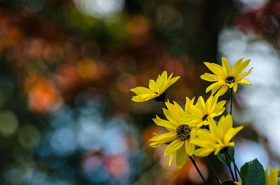 Autumn flowers van Dick Nieswaag