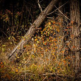 Herfst kleurig bos in Nederland   Natuurfotografie van Diana van Neck Photography