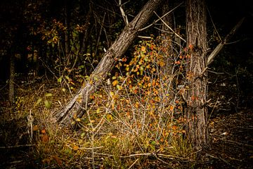 Herfst kleurig bos in Nederland | Natuurfotografie van Diana van Neck Photography