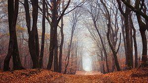 De wilde bossen van Tvurk Photography