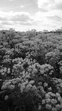 Bloemenveld zwart wit fotografie van Chantal Koper