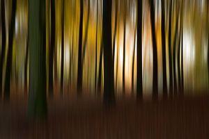 Herfst kleuren abstract bomen