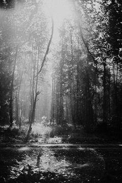 Verträumter Morgen im Wald von Holly Klein Oonk