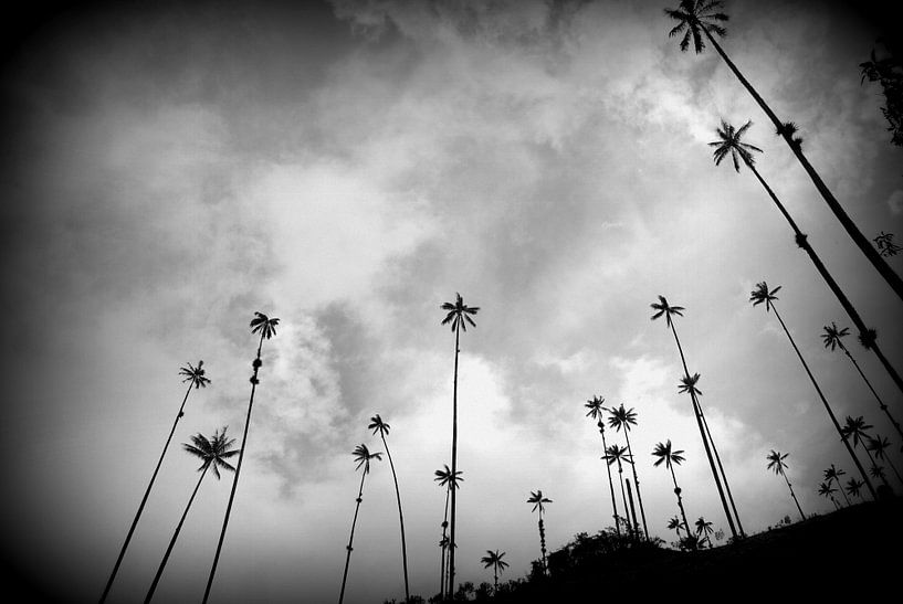 Wax palmen in Colombia van Stefan Kruizinga