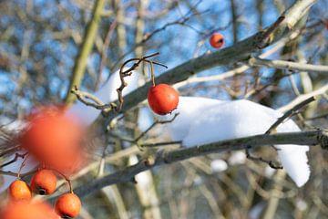 Rode sierappels met sneeuw van Ingrid de Vos - Boom