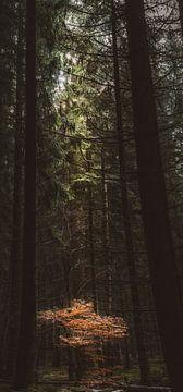 De boom heeft licht nodig