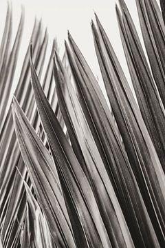 Sanur Blätter von Photo Atelier