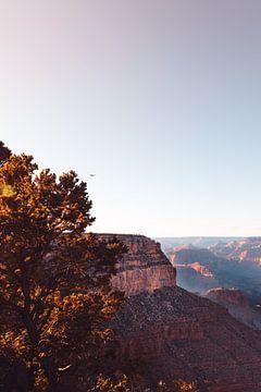 Een roofvogel vliegt boven de Grand Canyon in de herfst. van Moniek Kuipers