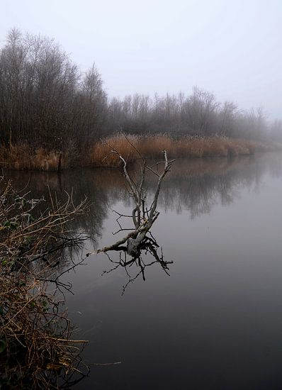 De Herfst van René Koert