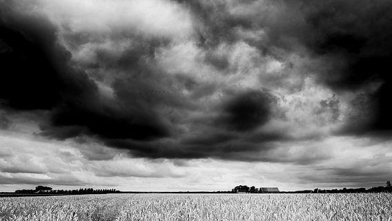 Gouden graanveld (zwart wit)