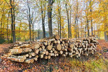 Herfst stapel boomstammen in bos  van Ben Schonewille