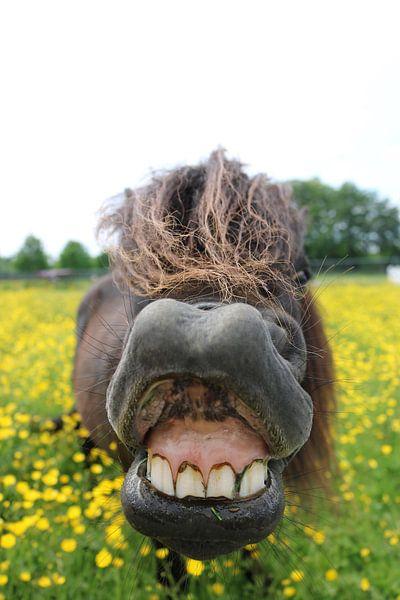 Smile van Martin Mol