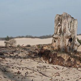 Oude boomstronk bij Loonse en Drunense duinen van Simone Meijer