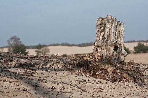 Oude boomstronk bij Loonse en Drunense duinen van