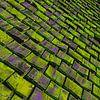 Oud Zweeds houten dak van arjan doornbos thumbnail